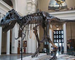 """暴龙——""""苏""""化石展览"""