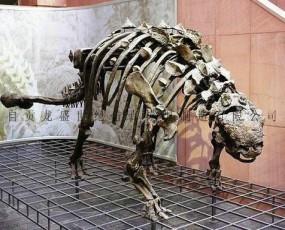 甲龙化石骨架  侏罗纪恐龙