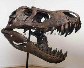恐龙头骨 恐龙化石