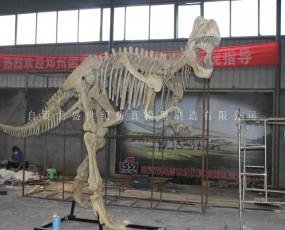 恐龙化石骨架 出租出售 恐龙化石骨架展览