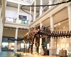 蜀龙化石骨架 侏罗纪恐龙