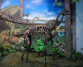 鹦鹉嘴龙化石骨架 恐龙博物馆展览