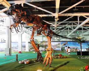 成都 恐龙化石展